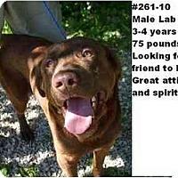 Adopt A Pet :: # 261-10 @ Animal Shelter - Zanesville, OH