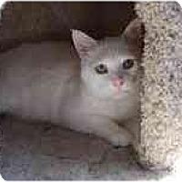 Adopt A Pet :: Trumpet - Modesto, CA