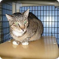Adopt A Pet :: Porter - Colmar, PA