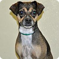 Adopt A Pet :: Meesha - Port Washington, NY