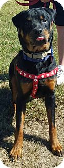 Rottweiler Mix Dog for adoption in Frederick, Pennsylvania - Ian