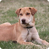 Adopt A Pet :: Zeke - Knoxville, TN