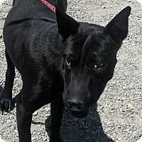 Adopt A Pet :: Ava - Mira Loma, CA