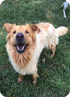Collie/Shar Pei Mix Dog for adoption in Baltimore, Maryland - Sasha