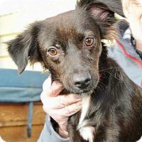 Adopt A Pet :: Swella - North Bend, WA