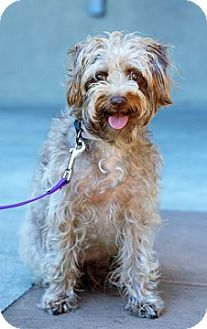 Terrier (Unknown Type, Medium) Mix Dog for adoption in Fremont, California - Giggles D4095