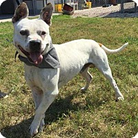 Adopt A Pet :: Starlord - Jacksonville, NC