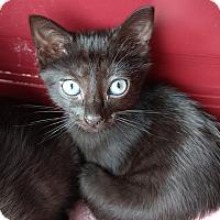 Adopt A Pet :: Ruby - Columbus, OH