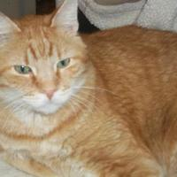 Adopt A Pet :: Garfield - Antigo, WI
