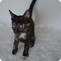 Adopt A Pet :: Mildred - Aurora, CO