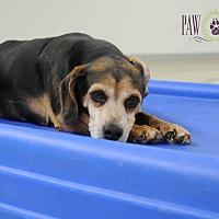 Adopt A Pet :: Monte - Agoura Hills, CA