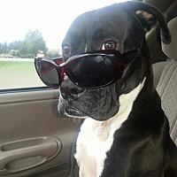 Adopt A Pet :: Princess - CRANSTON, RI