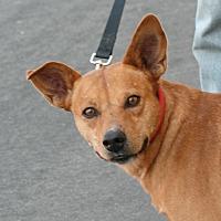 Adopt A Pet :: Kind - Palmdale, CA