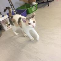 Adopt A Pet :: Heidi - Belleville, ON