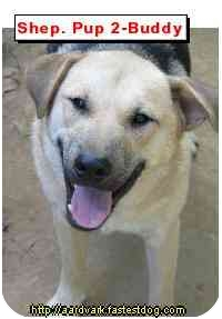 Shepherd (Unknown Type)/Husky Mix Dog for adoption in Talking Rock, Georgia - Buddy