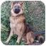 Photo 4 - German Shepherd Dog/Keeshond Mix Dog for adoption in Los Angeles, California - Bandit von Bern