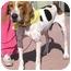 Photo 3 - Foxhound/Hound (Unknown Type) Mix Dog for adoption in Rolling Hills Estates, California - Jeep