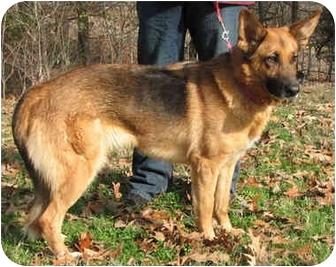 German Shepherd Dog Dog for adoption in Nesbit, Mississippi - Sheena