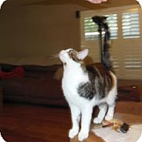 Adopt A Pet :: Samba - Mission Viejo, CA