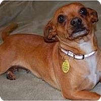 Adopt A Pet :: Lizzy - FOSTER NEEDED - Seattle, WA