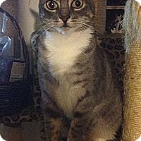 Adopt A Pet :: Fiona - Santa Rosa, CA