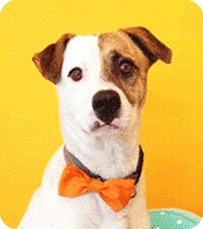 Labrador Retriever Mix Dog for adoption in Castro Valley, California - Mario