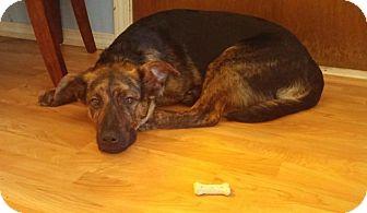 Shepherd (Unknown Type)/Mastiff Mix Puppy for adoption in Saskatoon, Saskatchewan - Sandy