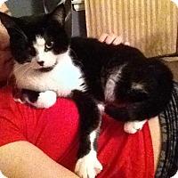 Adopt A Pet :: Shera - london, ON