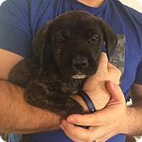 Adopt A Pet :: Rex - Marlton, NJ