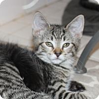 Adopt A Pet :: Lumiere - Fairfax, VA