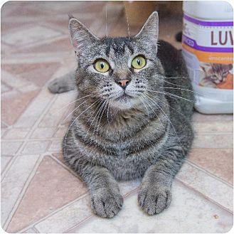 Domestic Shorthair Cat for adoption in Corinne, Utah - Dahlia