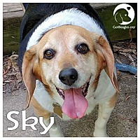 Adopt A Pet :: Sky - Pittsburgh, PA