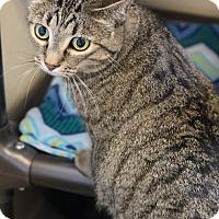 Adopt A Pet :: Lilith - Boise, ID