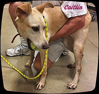 Labrador Retriever Mix Puppy for adoption in Ahoskie, North Carolina - Caitlin