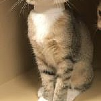 Adopt A Pet :: Felix - Philadelphia, PA