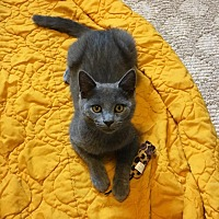 Adopt A Pet :: Anastasia - Lexington, KY