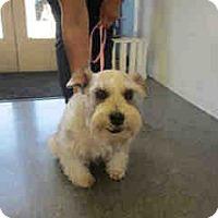 Adopt A Pet :: Shawnie - San Dimas, CA
