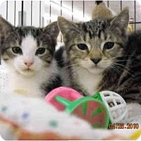 Adopt A Pet :: Jonah & Jonas - Riverside, RI