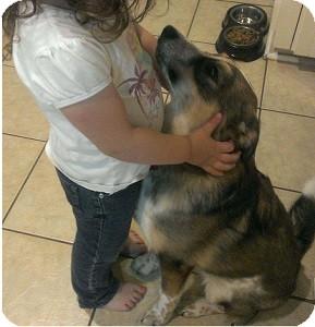 Border Collie Mix Puppy for adoption in Hamilton, Ontario - Rudy