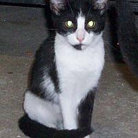 Adopt A Pet :: PATSY - Morriston, FL