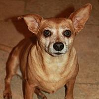 Adopt A Pet :: Sonic - Buckeye, AZ