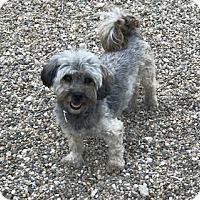 Adopt A Pet :: Maree - Prole, IA