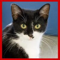 Adopt A Pet :: Vicky - Batavia, OH