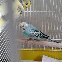 Adopt A Pet :: No names - Villa Park, IL