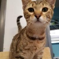 Adopt A Pet :: Colleen - Wellsville, NY