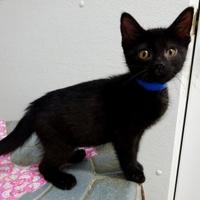 Adopt A Pet :: Scooter - Belleville, MI