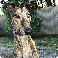 Adopt A Pet :: Lorenzo - Swanzey, NH