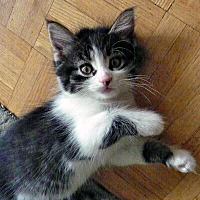Adopt A Pet :: Keriana - Mississauga, Ontario, ON