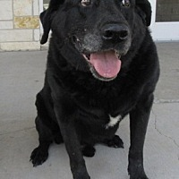 Adopt A Pet :: Shadow Sam - North Richland Hills, TX