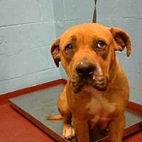 Adopt A Pet :: SWEETPEA - Atlanta, GA